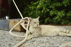 怀孕的猫 图库摄影
