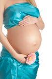 怀孕的腹部 免版税库存照片