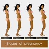 怀孕美丽的女孩阶段  皇族释放例证