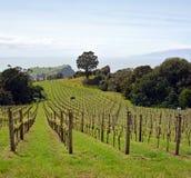 怀希基岛的,奥克兰,新西兰葡萄园全景 免版税库存图片