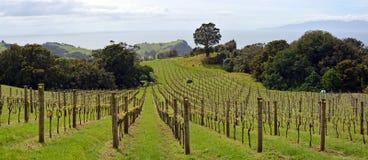 怀希基岛的,奥克兰,新西兰葡萄园全景 库存图片
