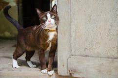 怀疑猫 免版税库存照片
