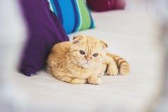 怀疑猫 免版税库存图片