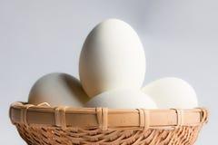 怂恿在白色背景,鸭子鸡蛋的篮子柳条 图库摄影