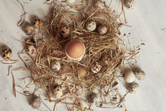 怂恿在老木桌背景的干草巢 免版税库存照片
