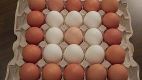 怂恿loopable动画 鸡蛋出现和失踪在蛋纸盒的 影视素材