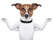 思考的狗 免版税库存照片
