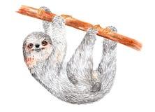 怠惰沿树枝爬行 额嘴装饰飞行例证图象其纸部分燕子水彩 免版税库存照片