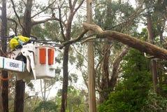 紧急情况服务工作者准备砍树 库存照片