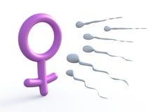 性标志妇女和精液 库存例证