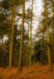怪异的森林 免版税图库摄影