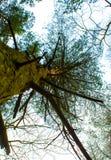 怪异的森林 免版税库存照片