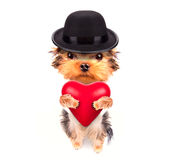 恋人华伦泰与红色心脏的小狗 库存图片