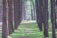 恋人在杉木庭院里 库存图片