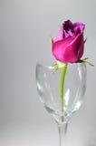 恋人的爱或华伦泰玫瑰。 免版税库存图片