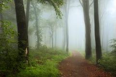 恋人足迹在有薄雾的森林里 库存图片