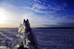 恋人-两条狗遇见日落 免版税库存图片