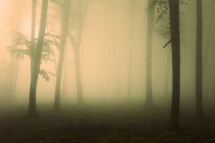 恐怖光到有薄雾的森林里 库存照片