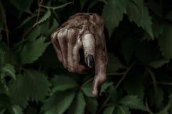 恐怖和万圣夜题材:有黑人指甲盖蛇神的可怕的肮脏的手爬出绿色叶子,走的死的启示 库存图片