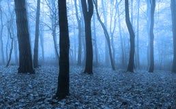 恐怖场面在有雾的森林里 免版税库存照片