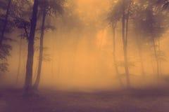 恐怖有雾的森林场面 免版税库存照片
