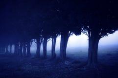 恐怖森林在晚上 免版税库存照片