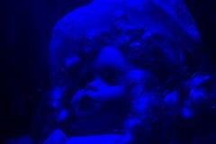 恐怖玩偶蓝色照射角度视图 免版税库存图片