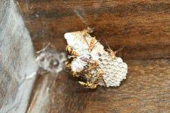 恐怖的刺痛的昆虫 库存照片