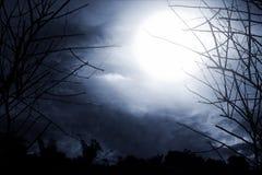 恐怖背景森林在晚上 库存照片