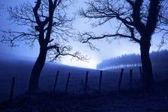 恐怖风景在与蠕动的树的晚上 免版税库存图片
