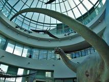 恐龙展览在自然科学北卡罗来纳博物馆  库存图片