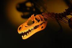 恐龙概要 免版税图库摄影