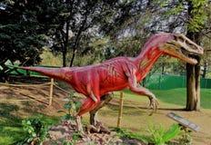 恐龙的腱和肌肉,他是剧烈的 库存照片