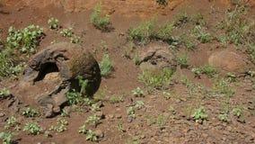 恐龙蛋在湿Olhovka Kotovo区附近被找到,伏尔加格勒地区村庄, 股票视频