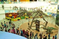 恐龙陈列 免版税库存图片