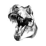恐龙顶头暴龙 免版税库存图片