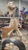恐龙骨与实物大小一样万圣夜的支柱 免版税库存照片