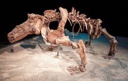 恐龙骨骼 库存图片