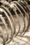 恐龙骨骼 免版税图库摄影