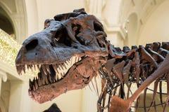 恐龙骨骼 免版税库存图片