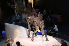 恐龙 掠食性动物的骨骼 伦敦 库存图片