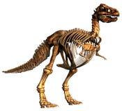 恐龙暴龙 免版税库存照片