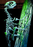 恐龙- Deinonychus 库存图片
