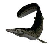 恐龙mosasaur 库存图片