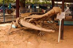恐龙Sarcosuchus imperator的骨骼在尼亚美,尼日尔 库存照片