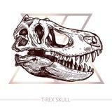 恐龙TRex头骨头骨剪影  库存图片