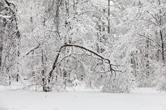 恶劣天气概念 降雪在公园,冬天天气场面,积雪的树环境美化 图库摄影