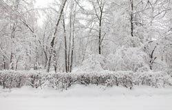 恶劣天气概念 降雪在公园,冬天天气场面,积雪的树环境美化 库存照片