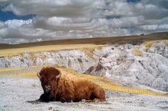 恶地国家公园,红外线 南达科他 免版税库存照片