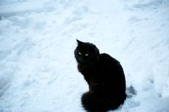 恶意嘘声在白色雪的冬天 库存照片